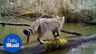 An array of animals all use the same fallen trunk as a bridge