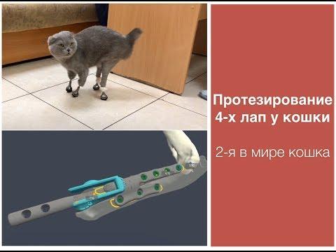 Протезирование 4-х лап у кошки после перенесенной ампутации