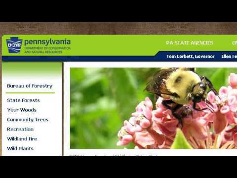 How-To Landscape With Native Plants In Pennsylvania