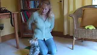 Teach Your Yorkie to Recognize His Name With These Obedience Tips