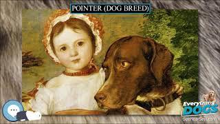 Pointer dog breed  Everything Dog Breeds