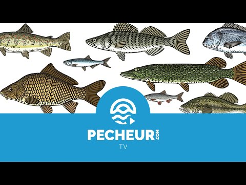 Ma question pêche #000