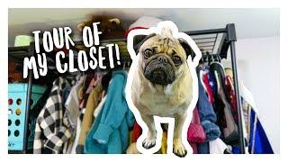 Tour of Doug The Pug's Closet!