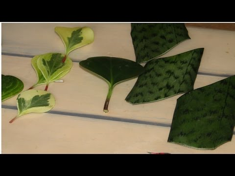 Curso Como Produzir Plantas Ornamentais - Métodos de Propagação