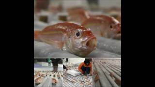 Japan ice rink sparks frozen fish outrage - World Breaking News by voice