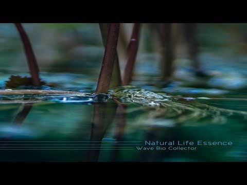 Natural Life Essence - Wave Bio Collector [Full Album]