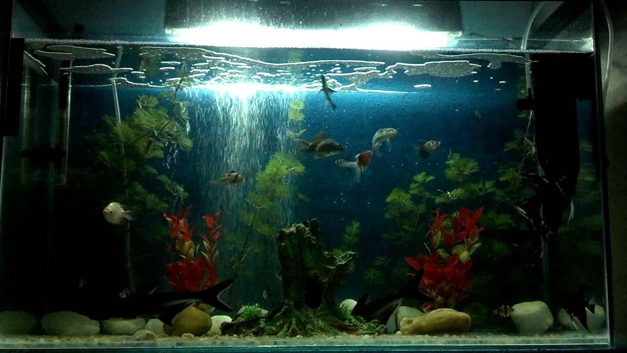 Nosso Aquário do quarto com tubarão  YouTube