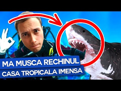 World of Diving | Max pe sub apa | Episodul 1 from YouTube · Duration:  20 minutes 17 seconds