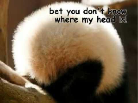Funny pandas youtube funny pandas voltagebd Choice Image