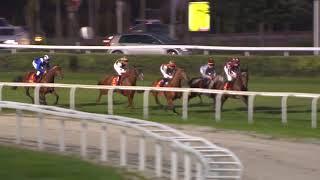 Vidéo de la course PMU FRENCH ARABIAN BREEDERS' CHALLENGE - POULICHES