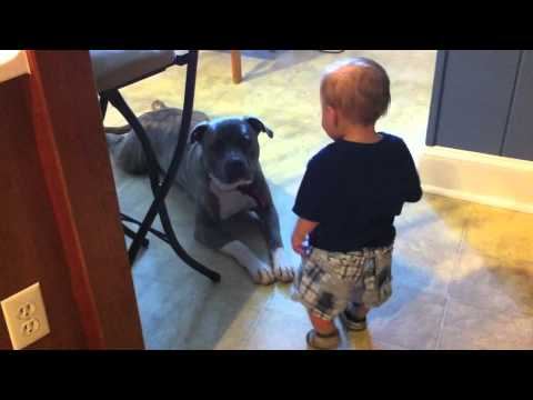 Pitbull Meets a Baby
