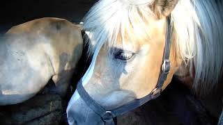 Stajnia koło domu. Jak mieszkają moje konie.