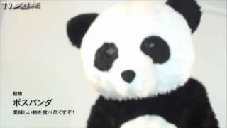動物:ボスパンダTVライブオンラインCM。 TVLOL.net - Captured Live on...