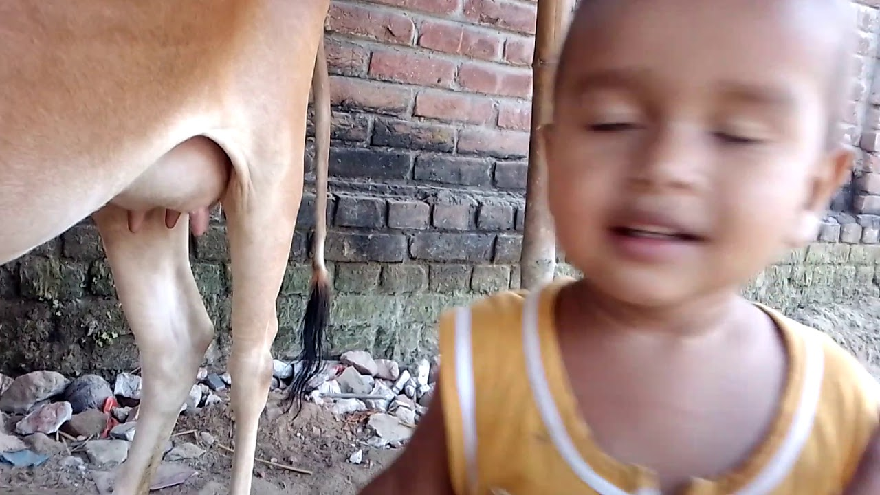 Cute toddler collecting milk