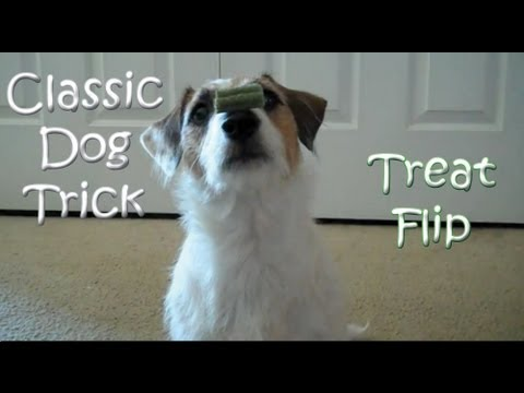 Classic Dog Trick: Nylabone Treat Flip