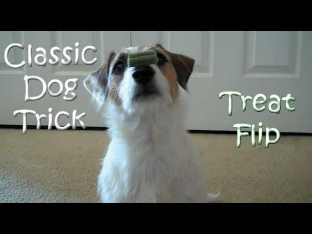 Classic Dog Trick: Nylabone Treat Flip