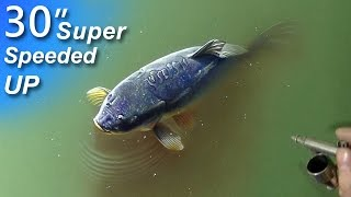 Drawing a fish in the pond - 3D illusion - Speed-up Art