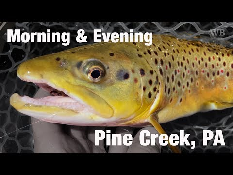 WB - Fly Fishing Morning & Evening, Pine Creek, PA + Bonus Ending - June '17