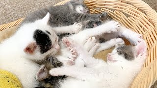 突然シンクロする4匹の子猫