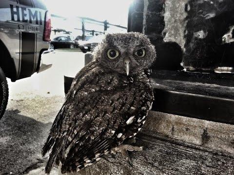 baby-owl-rescue-video-three-progress