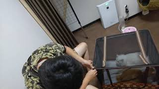 本日、台風が来る前に島根県立大学太田市にある、猫とも泊まれるし猫の...