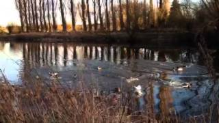 Duck Dynasty, English Duck Commander