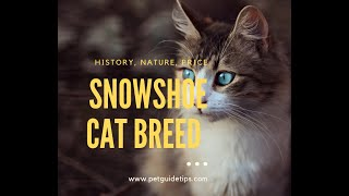 Snowshoe Cat Breed | Facts, Lifespan and Price | Animal Planet