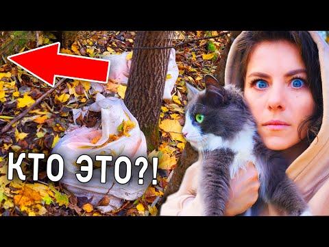 Кошка на прогулке в лесу, играем в прятки с кошкой, расследуем историю с мешками ВЛОГ