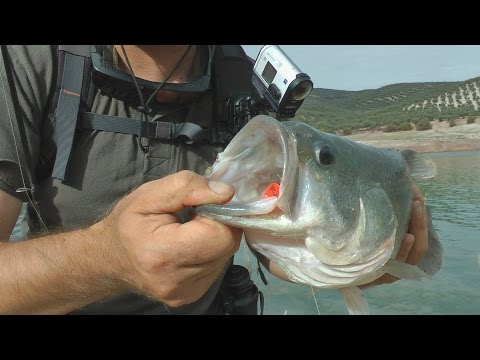 рыбалка без границ ловля красноперки