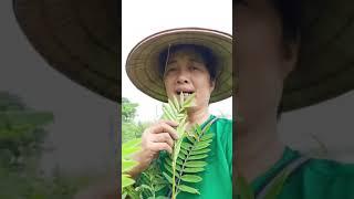 Chia sẻ cách trồng khoai sọ chất lượng - Đông Y Thiên Lương