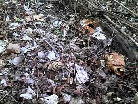Mushroom King Oklahoma 2011-03-26_11-55-04_201.3gp