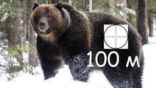 Часть 2. Выстрел в медведя с МР27М, дистанция 100 м