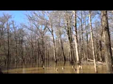 bayou meto Bayou meto land and leasing co prides itself in good ole southern hospitality,  duck hunting, deer hunting, lodging and the leasing and crop development of.