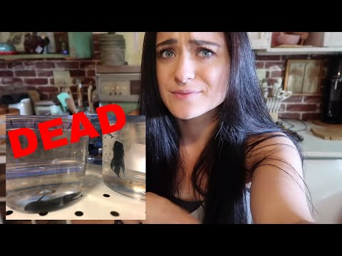 Exposing Pet Stores