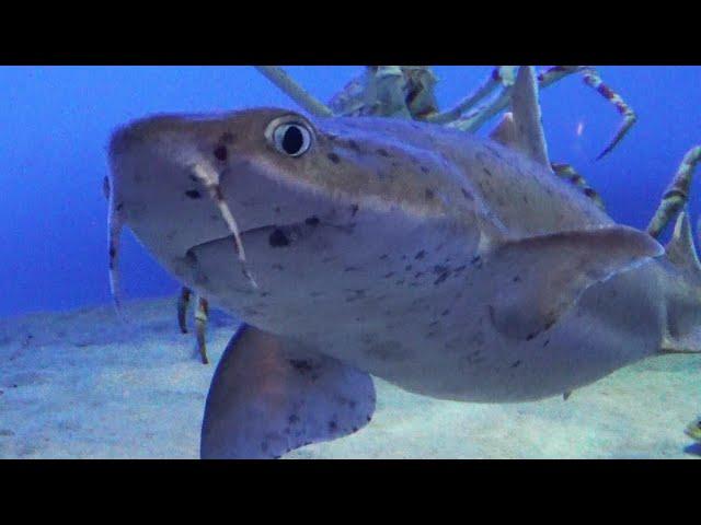 ひっそり生きた30年、「同期」の飼育員が見守るサメ