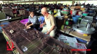[Tập 21] Hương sen Đồng Tháp - Khám phá Việt Nam cùng Robert Danhi