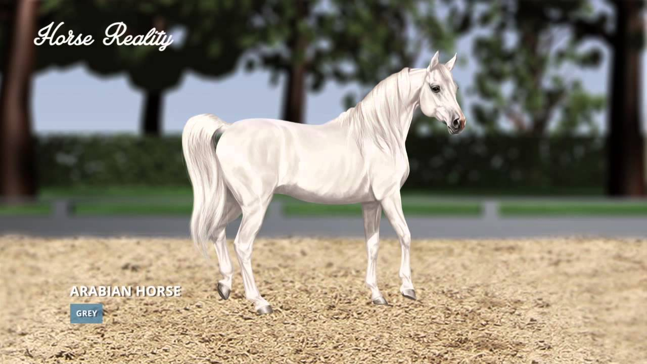 realistic horse breeds # 27