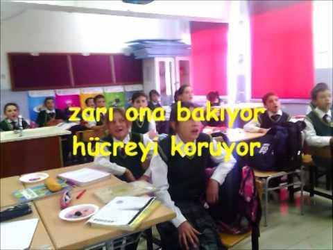 HÜCRE ŞARKISI
