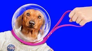 Evcil Hayvanlar için 13 Kendin Yap Tarzı Yaratıcı El İşi & Hile / Basit Pratik Bilgiler