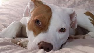 O cachorro surdo que aprendeu língua de sinais após ser rejeitado por 5 donos