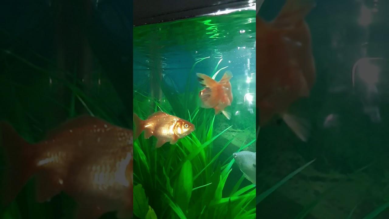 My fish tank fish slow motion video