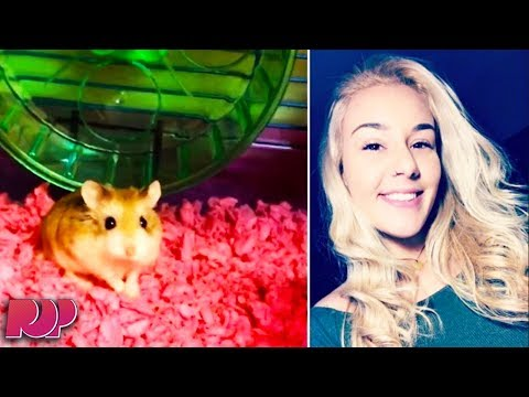 Woman Blames Spirit Airlines For Making Her Flush Her Hamster Down The Toilet
