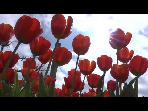 Planting Tulip Bulbs in Fall | GHC In-Depth With P. Allen Smith