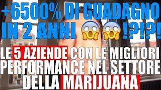 Le 5 Aziende con le Performance Migliori di Sempre nel Settore della Cannabis !