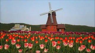 チューリップ公園-Tulip Park in Yubetsu Hokkaido-北海道湧別町上湧別