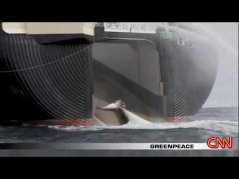 [CNN] Japanese Whale Hunt Begins                  2008.11.17