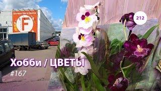 212#167 / Хобби-Цветы / 09.2019 - Floreville (ФЛОРЭВИЛЬ. МОСКВА)