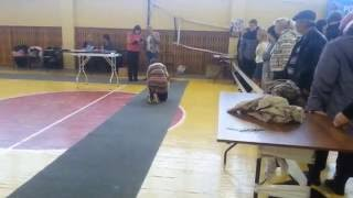 Выставка Абакан 1.10.16 Ринг Шелти