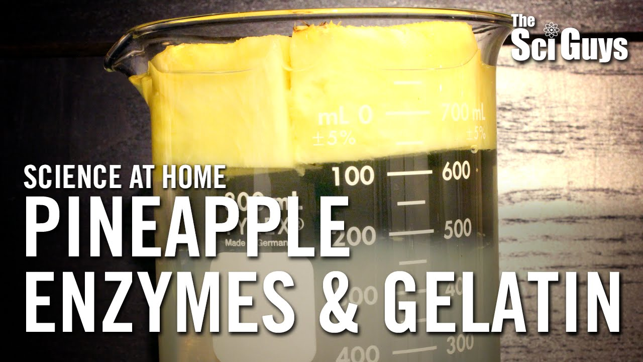 Pineapple Enzymes and Gelatin - The Sci Guys: Science at Home