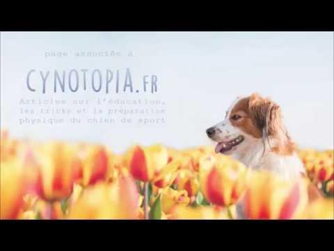 Ludie & Nyastiel dog tricks - short